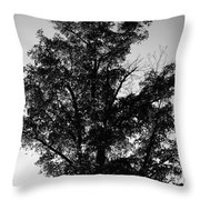 September Tree ... Throw Pillow