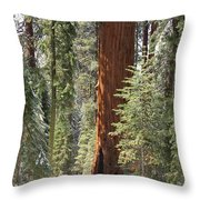 Sequoia General Sherman Throw Pillow