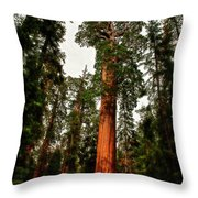 Sequoia In Kings Canyon Throw Pillow