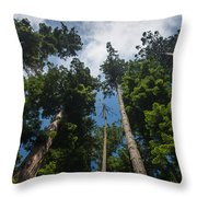 Sequoia Park Redwoods Reaching To The Sky Throw Pillow