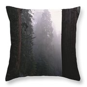 Sequoia Trees Dwarf A Car Traveling Throw Pillow