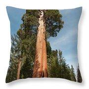 Sequoia Trees Throw Pillow