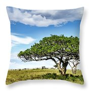Serengeti Acacia Throw Pillow