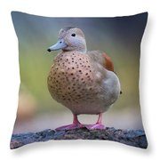 Seriously Cute Throw Pillow by Cindy Lark Hartman