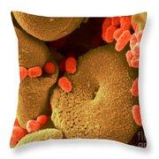 Serratia Marcescens Throw Pillow
