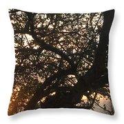 Setting Sun In Tree Throw Pillow