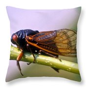 Seventeen Year Cicada Throw Pillow