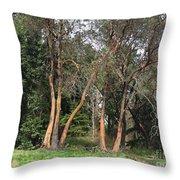 Seward Park Trees Throw Pillow