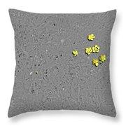 Sfscl00303 Throw Pillow