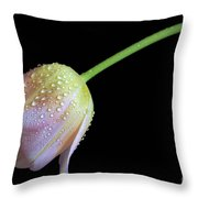 Shade Tulip Throw Pillow by Tracy Hall