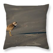 Shadow - Semipalmated Plover Throw Pillow