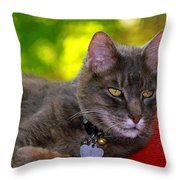 Shadow's Glamour Shot Throw Pillow