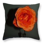 Shadows Of A Peach Rose Throw Pillow
