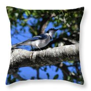 Shadowy Blue Jay Throw Pillow