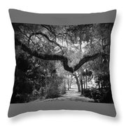 Shadowy Pathway Throw Pillow