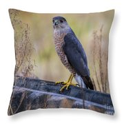 Shakerag Coopers Hawk Throw Pillow