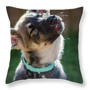 Shakey Shake Throw Pillow