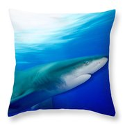 Shark In Rapid Motion Throw Pillow