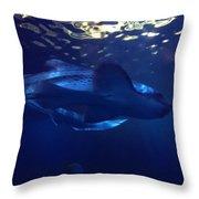 Shark In The Sunlight  Throw Pillow