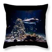 Shark In Zoo Aquarium Throw Pillow