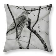 Sharp-shinned Hawk Black And White Throw Pillow