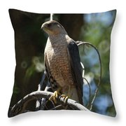 Sharp Shinned Hawk Throw Pillow
