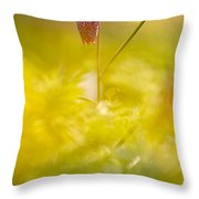 She Comes In Colours Throw Pillow