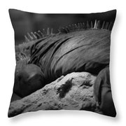 Shedd Aquarium Iguana Throw Pillow