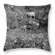 Sheep In Bw Throw Pillow