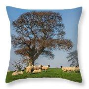 Sheep In Somerset Throw Pillow