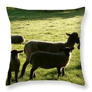 Sheep In The Sunlight Throw Pillow