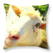So Sheep Of You To Leave Me Here  Throw Pillow