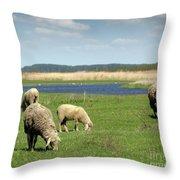 Sheep On Pasture Nature Farm Scene Throw Pillow