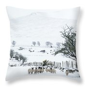 Sheep Shelter  Throw Pillow