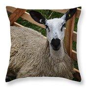 Sheep Two Throw Pillow