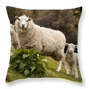 Sheep With Twin Lambs Stony Bay Throw Pillow by Colin Monteath