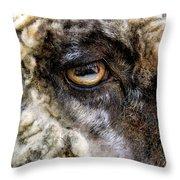 Sheep's Eye Throw Pillow