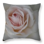 Sheer Bliss Rose Throw Pillow