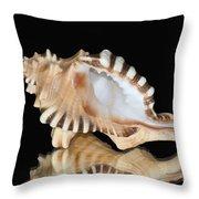 Shell On Black Throw Pillow