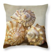 Shell Still Life Throw Pillow
