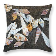 Shells From The Sea Of Galilee Throw Pillow