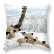 Sheltering Flock Throw Pillow
