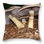 Sheltering The Young Throw Pillow