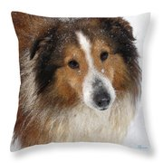 Sheltie In The Snow Throw Pillow