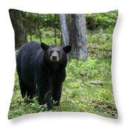Shenandoah Black Bear Throw Pillow