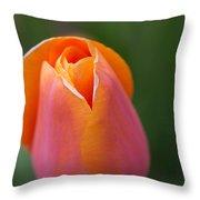 Sherbet Tulip Throw Pillow