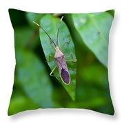 Shield Bug Throw Pillow