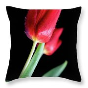 Shine Throw Pillow by Tracy Hall