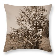 Shoe Tree In Sepia Throw Pillow