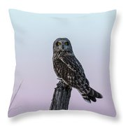 Short-eared Owl 2018-6 Throw Pillow